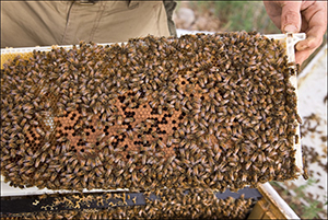 Hive Bar of Full of Bees