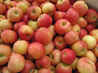 A Pile of Red Gala Apples